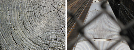 Close-ups of Bark and a Chain Fence by PWP-WIN Students