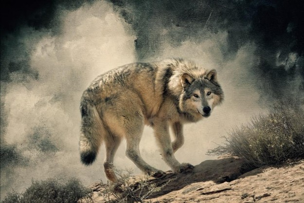 Gray Wolf by Lou Ann Goodrich