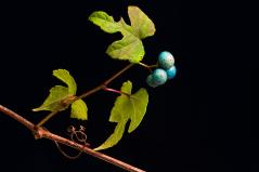 Porcelain Berries 1