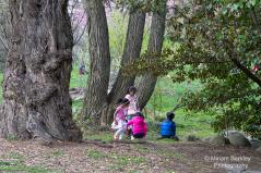 Trees and Children at Play